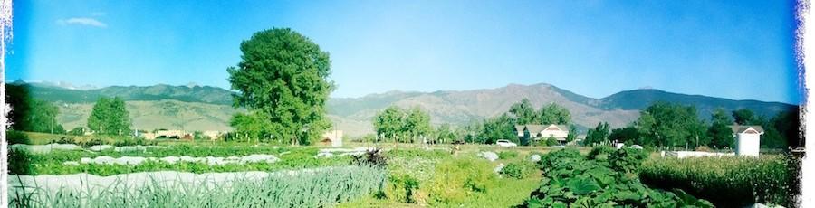 Kilt Farm